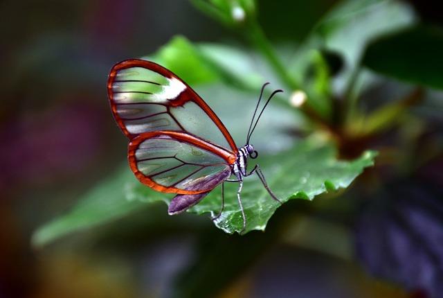 Glass Falter, Transparent, Tender, Invisible, Sensitive