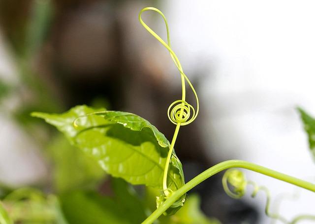 Violin Key, G Key, Tendril, Music, Plant