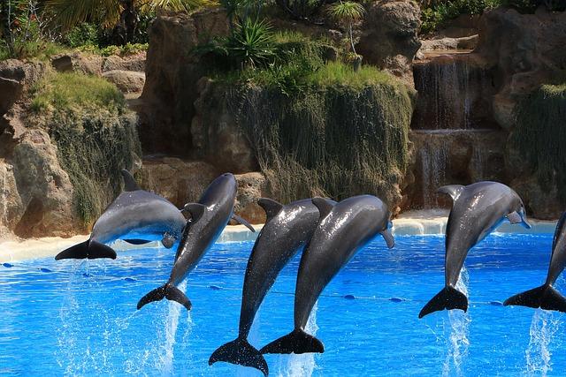Dolphins, Herd, Preview, Tenerife, Loro Park, Fun, Wet