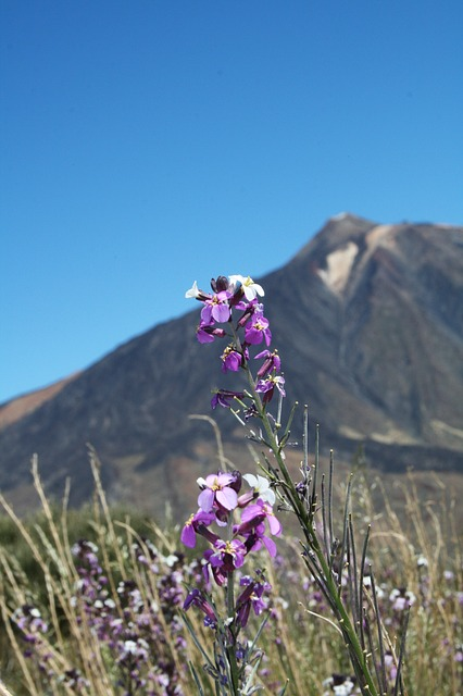 Canary Islands, Teide National Park, Tenerife, Spain
