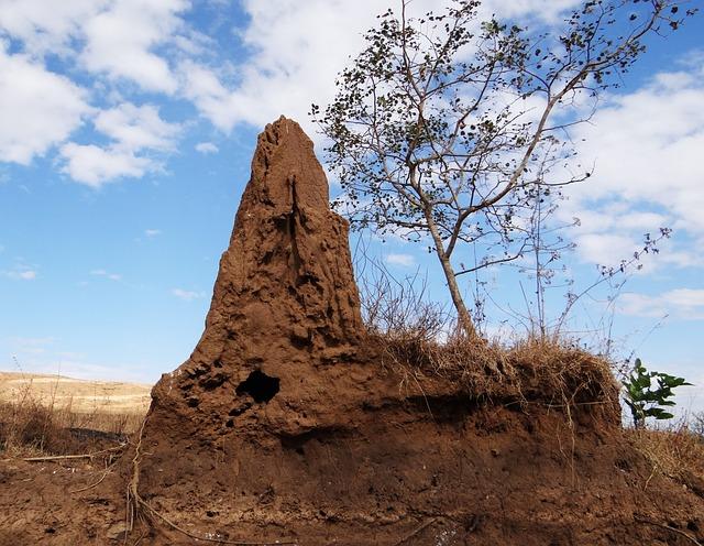 Termite Hill, Termites, Termite Mound, Termitarium