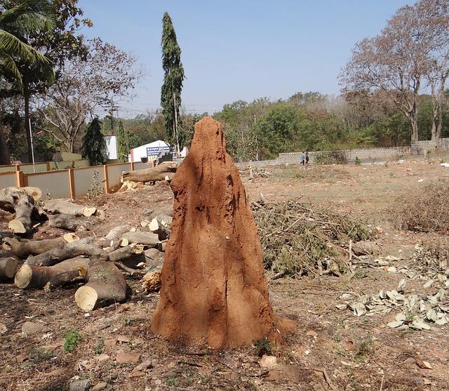 Termite Hill, Termites, Mound, Dharwad, India, Termite