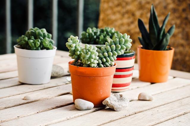 Fat Plants, Garden, Terrace, Plant, Of Wood, Leaf, Wood