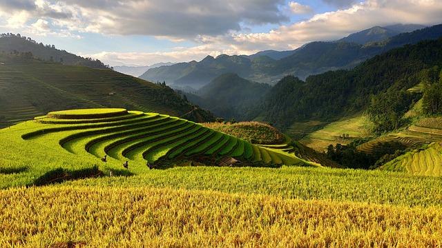Agriculture, Vietnam, Terraces, Vietnam Agriculture