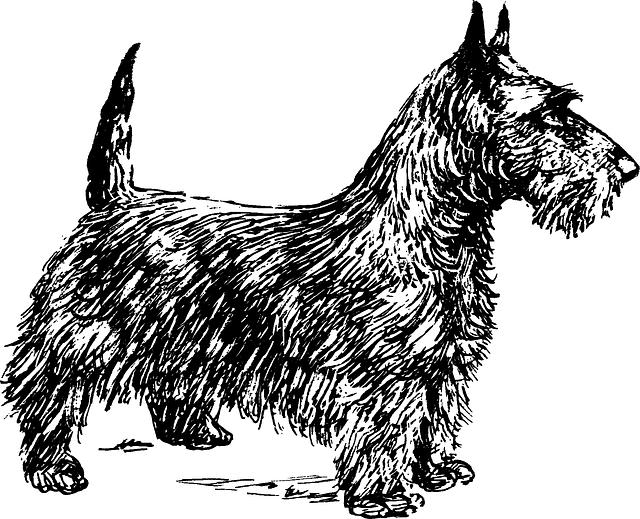 Fox Terrier, Terrier, Dog, Animal, Biology, Mammal, Pet