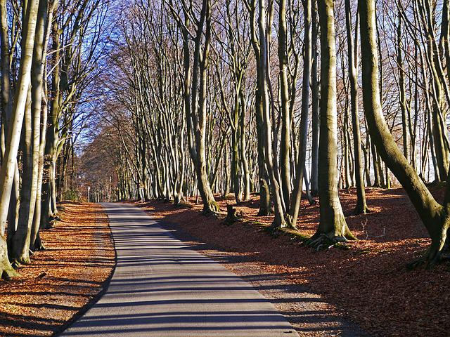 Teutoburg Forest, Forest Path, Beech Wood, Hermann Way