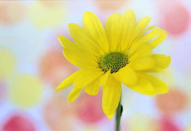 Daisy, Yellow, Text Space, Background, Nature, Flower