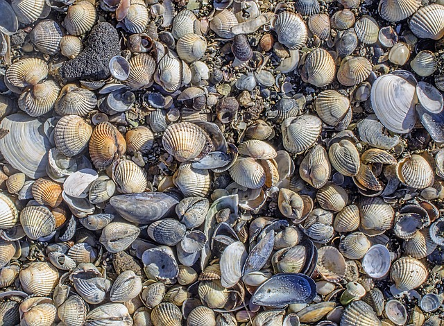 Background, Texture, Detail, Mussels, Beach