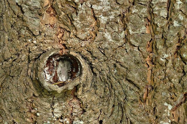 Bark, Texture, Background, Tree, Tribe, Nature, Rau