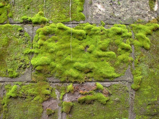 Moss, Wall, Green, Rock, Texture, Background