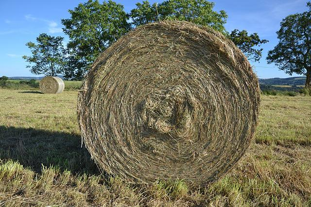 Hay, Roller, Nature, Texture, Dry, Grass