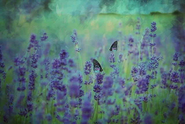 Texture, Background, Lavender, Lavender Field