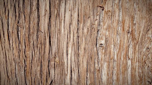 Trunk, Bark, Tree Bark, Tree, Nature, Wood, Texture