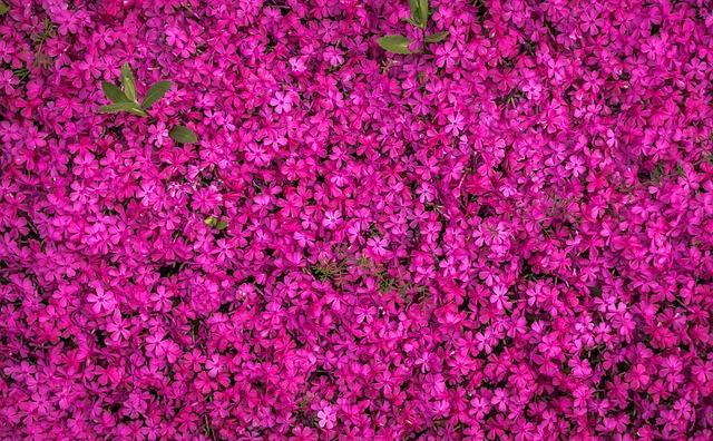 Flowers, Spring, Spring Flowers, Purple, Texture