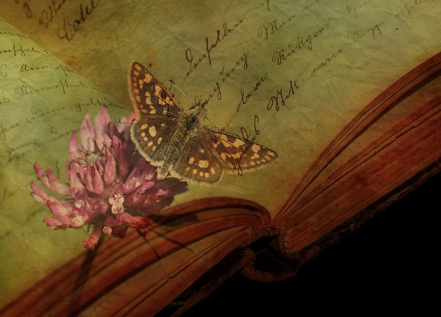 Texture, Background, Butterfly, Book Page, Font, Text