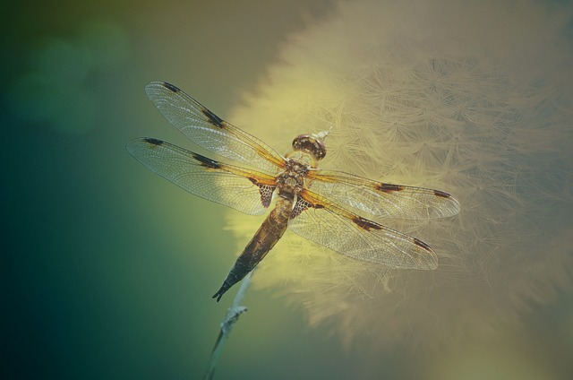 Texture, Background, Dragonfly, Insect, Transparent