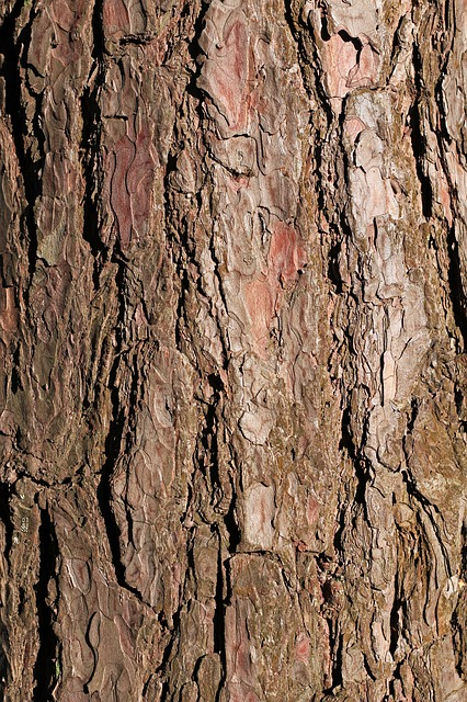 Bark, Pine, Tree, Texture, Background, Brown, Close