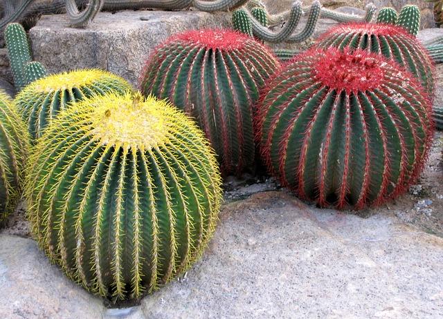 Cactus, Botanical Garden Nong Nooch, Thailand