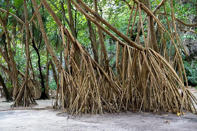 Phi Phi Islands, Phi Phi Lay, Roots, Thailand, Phuket