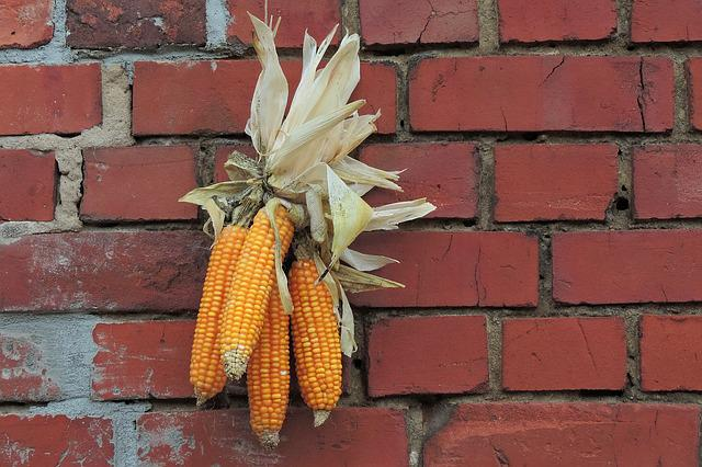 Thanksgiving, Decoration, Corn, Hauswand, Stone Wall