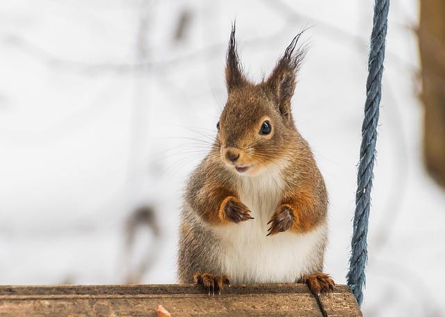 Cute, Mammals, The Animal Kingdom, A Little