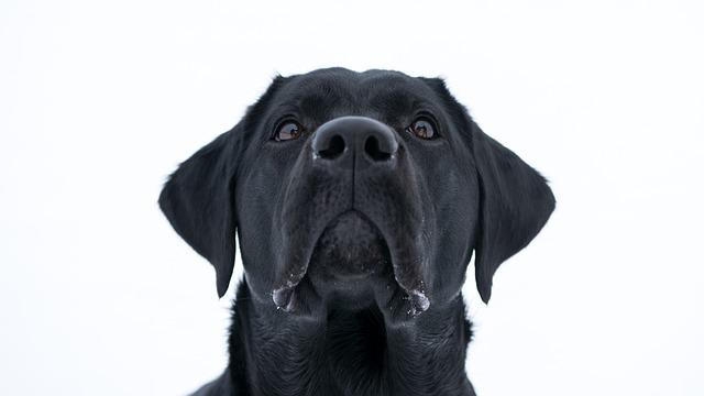 Dog, The Animal Kingdom, Cute, Pet, Mammals