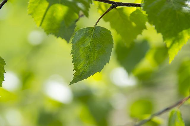 Green Color, The Background, Foliage, Green Leaves