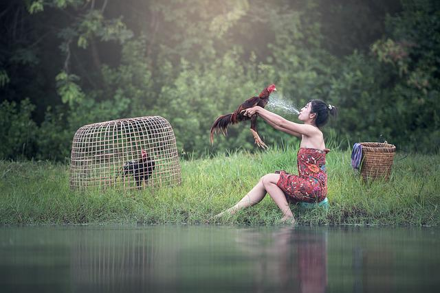 Woman, River, The Bath, Animals, Asia, Bangkok, Beak