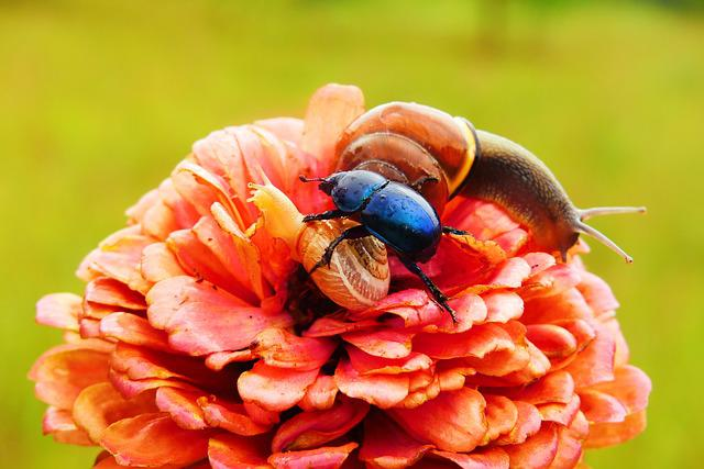 Forest Beetle, The Beetle, Insect, Molluscs, Snail