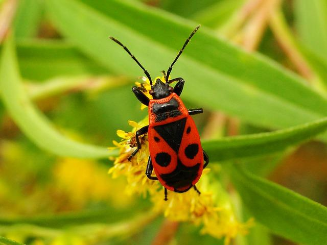 Insect, Nature, Antennae, The Beetle, Summer, Animals