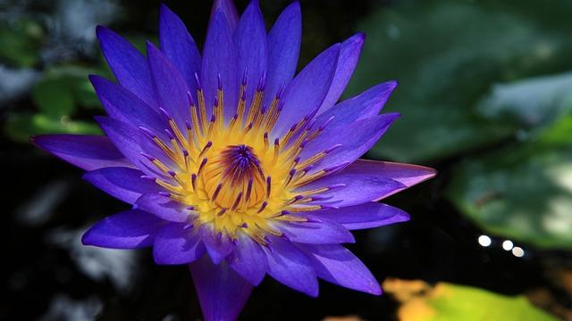 Hoi An, The Blue Lotus, Temple, Vietnam