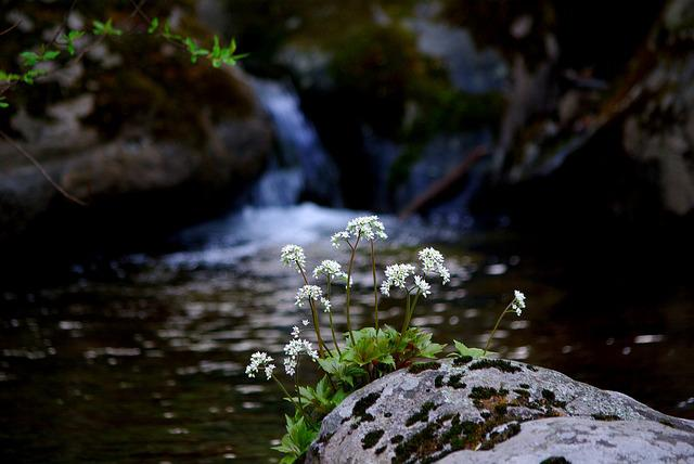 The Body Of Water, Nature, Wildflower, Stone Leaves