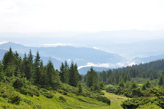 The Carpathians, Mountains, Forest, Pine, Clouds