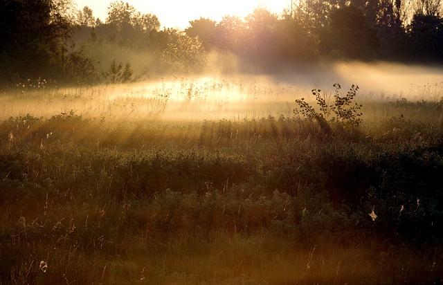 The Fog, Sunrise, The Rays, Forest, Meadow, Scrubs