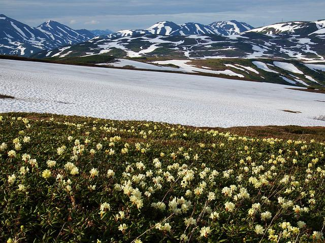 Flowers, Rhododendrons, Mountains, Volcano, The Foot