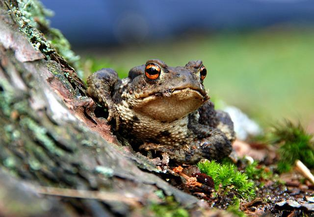 The Frog, Amphibian, Forest, Nature, The Creation Of