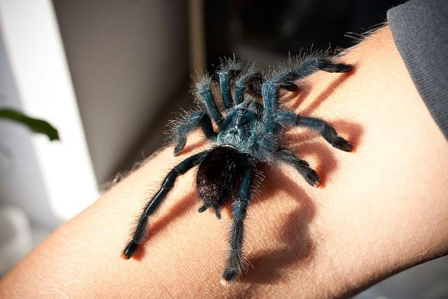 Spider, Reptile Supplies, Birdman, The Hand