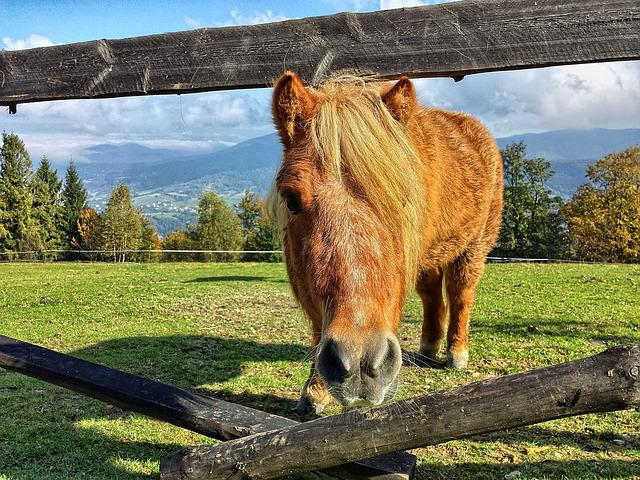 The Horse, Konik, Horses, Animals, Mountains, Beskids