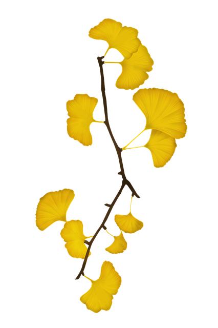 Ginkgo, Bank Leaves, Bank, The Leaves