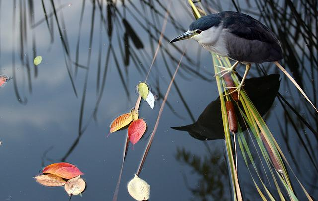 Migratory Birds, Hunt, Reed, The Leaves, Nature, New