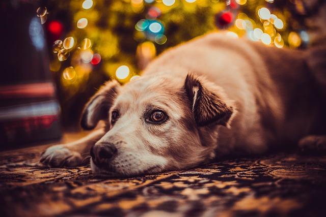 Dog, Holidays, Nice, Doggy, The Lights, Bokeh