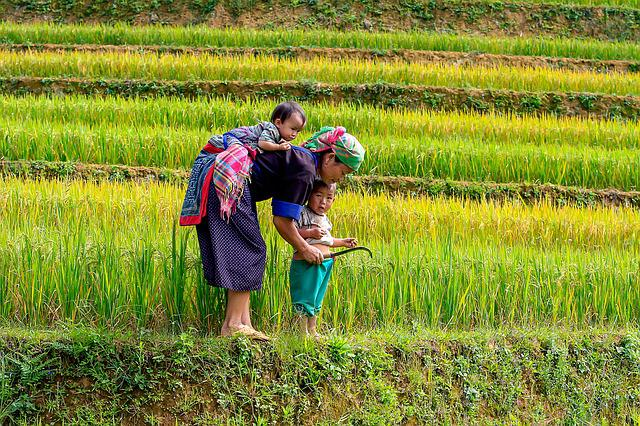 The Mother, Kids, Rice Fields, Two Kids, Green, Yellow