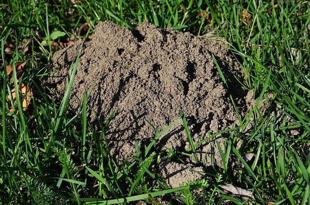 The Mound, Mole, Lawn, Kretówka, Earth, Nature, Grass