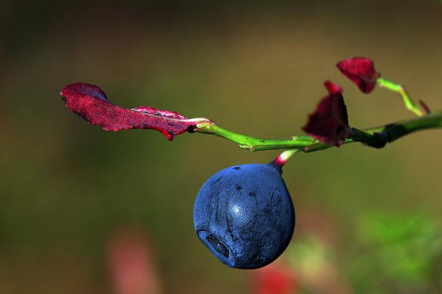 The Nature Of The, Blueberry, Leaf