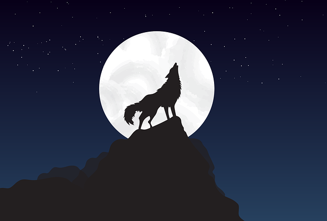 Wolf, Stand, Walk, The Moon, The Night