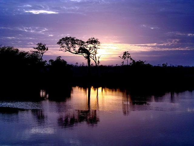Gayana, The River Demerara, Demerara River, Jungle