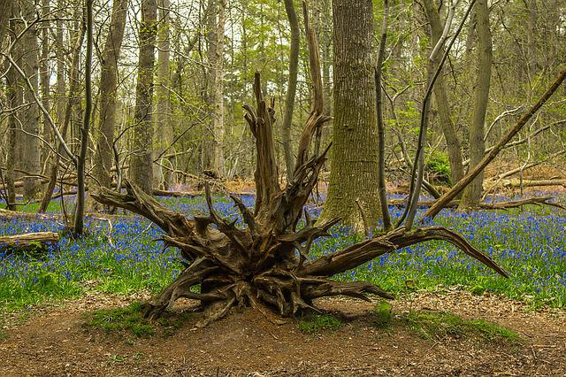 The Root Of The, Trees, Spring, Nature