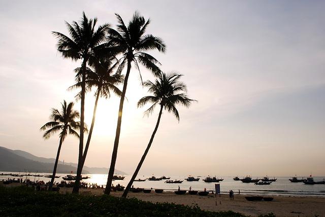 Coconut Tree, Melons, The Sea, Coast, The Beach