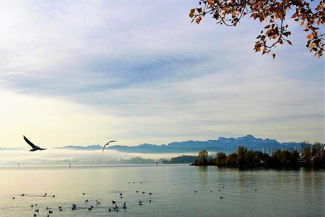 The Seagulls, Water, Lake