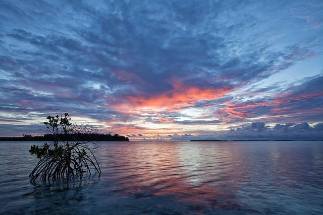 The Shallow Sea, Before Sunrise, Mangrove, Kojima